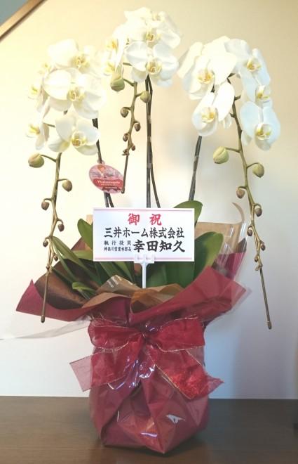 三井ホーム 胡蝶蘭